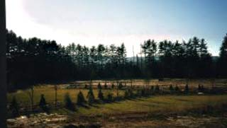 field with planted trees